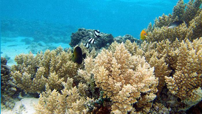 underwater-atutaki-lagoon